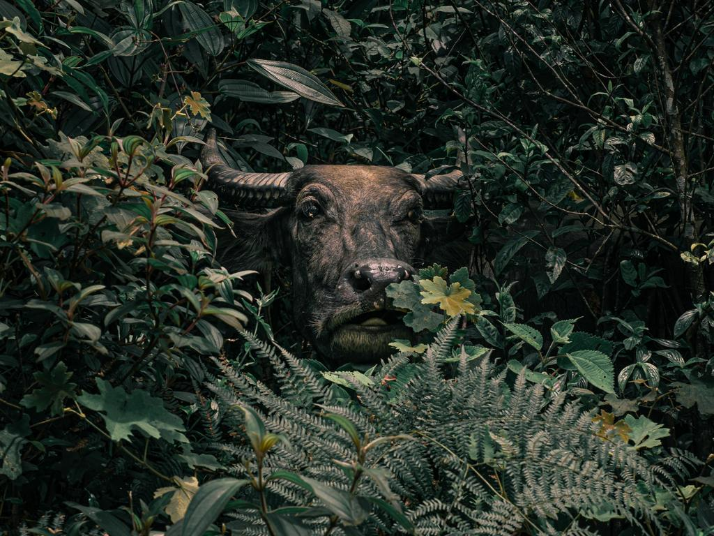 Will Venter's entry into the Sony World Photography Awards 2020, which took home a spot as Winner in the National Awards. Picture: Will Venter/2020 Sony World Photography Awards