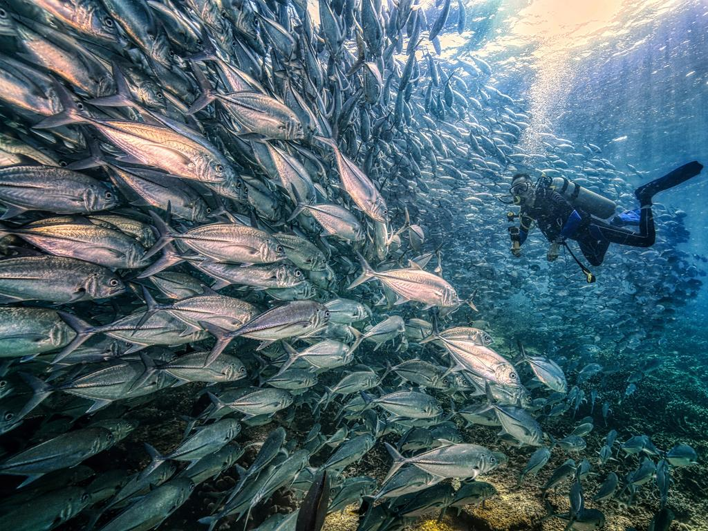 Kim Moon Lai's entry into the 2020 Sony World Photography Awards, which took home a place of second in the National Awards. Picture: Kam Moon Lai/2020 Sony World Photography Awards