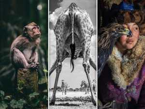Winners of the Sony World Photography Awards