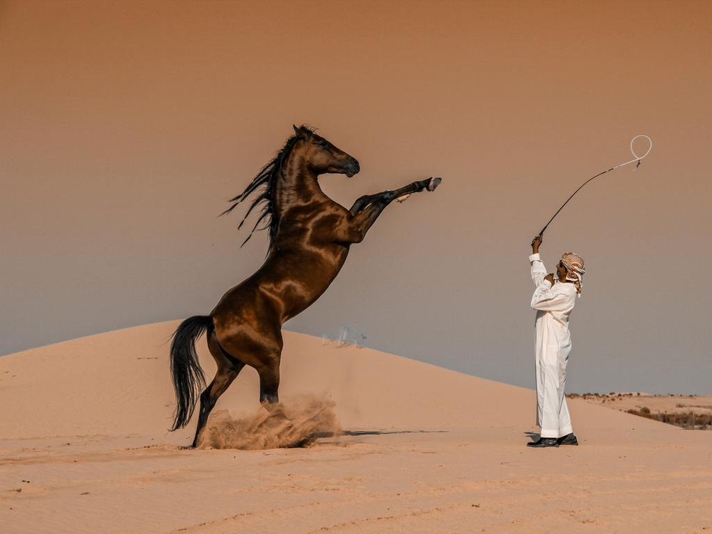 Abbas Alkhami's entry into the 2020 Sony World Photography Awards, which took home a place as Winner in the National Awards. It is of a horse breeder in Abu Dhabi, United Arab Emirates. Picture: Abbas Alkhamis, Saudi Arabia/2020 Sony World Photography Awards