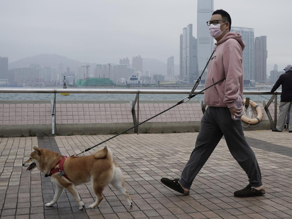 A man wearing a mask walks his dog in Hong Kong, Friday, March 6, 2020. Pet cats and dogs cannot pass the new coronavirus to humans, but they can test positive for low levels of the pathogen if they catch it from their owner. Picture: Kin Cheung
