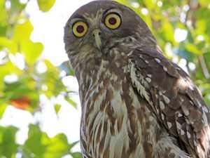 BRIGGSY'S BIRDS: Bird barks like a dog and can scream too