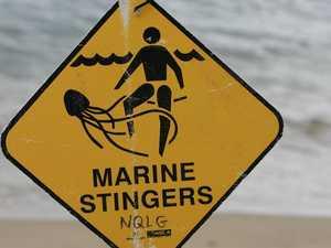 Marine stingers cause Mackay Harbour Beach to close
