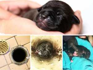 WATCH: Tiny puppy pulled from bathroom pipe