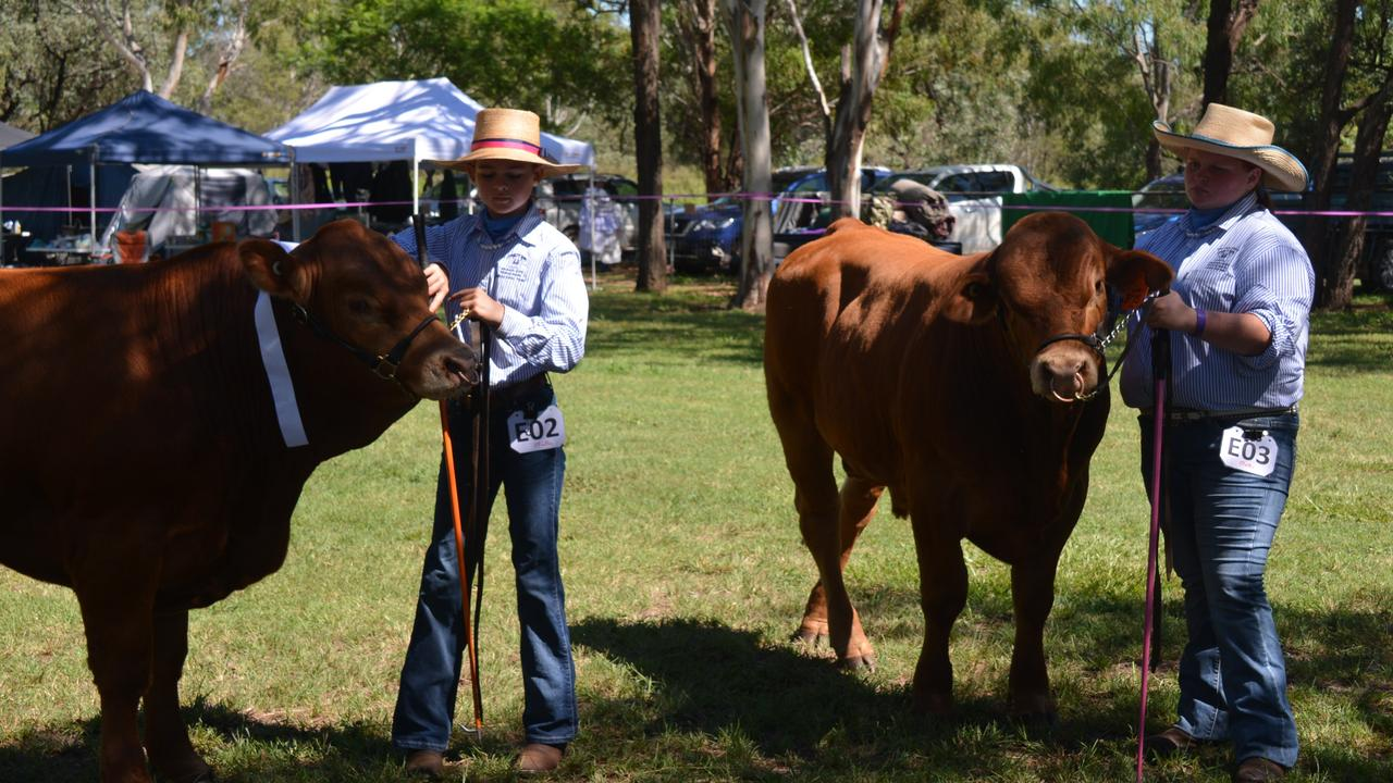 Hannah Needer and Abby Nowland show cattle at the Proston Show on March 7, 2020. (Photo: Jessica McGrath)
