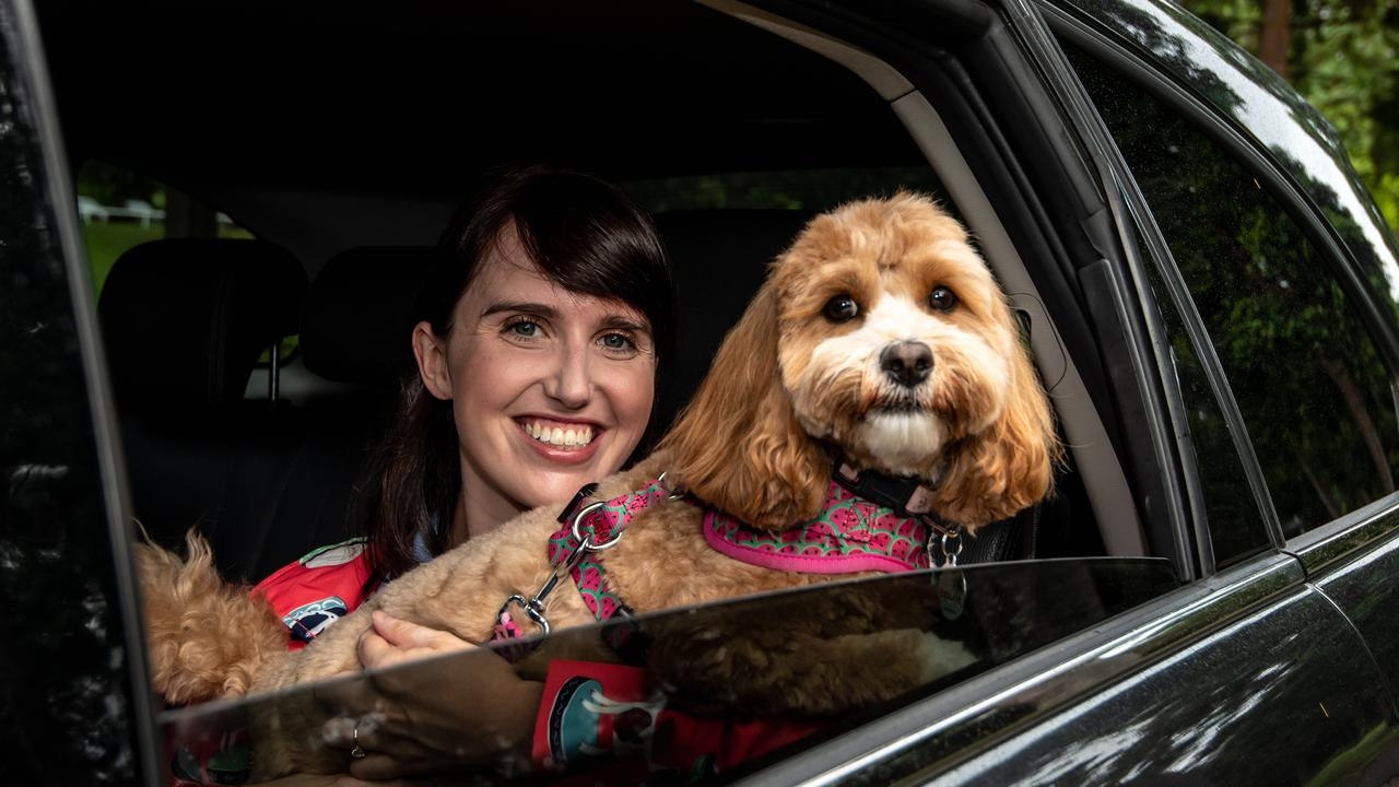Uber will from this week trial customer trips with pets to counter pet-unfriendly public transport options in Sydney and Brisbane. This is how it will work, what it costs and what suburbs you can get a ride with your furry friend. Picture: Monique Harmer
