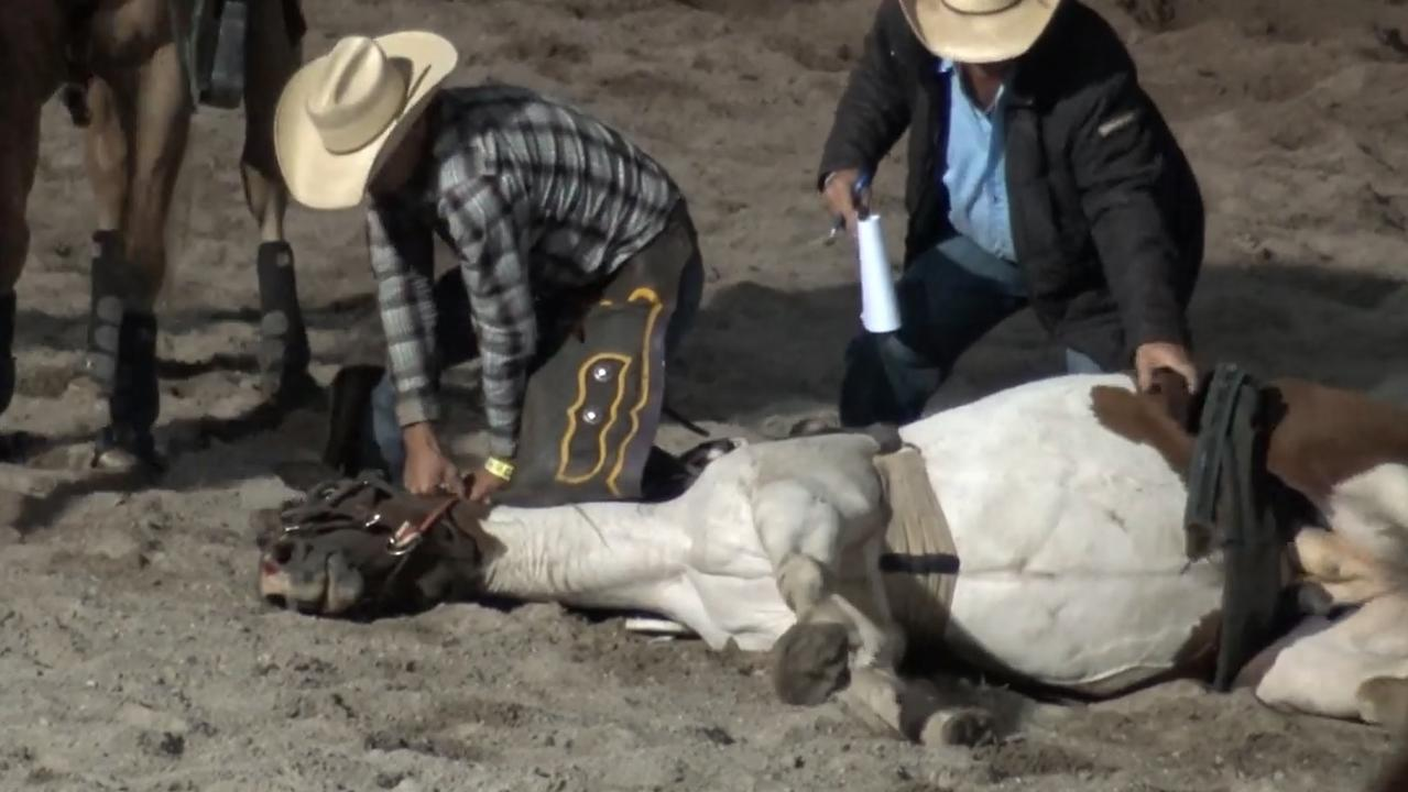 A horse died at the Stanthorpe Rodeo on March 7.