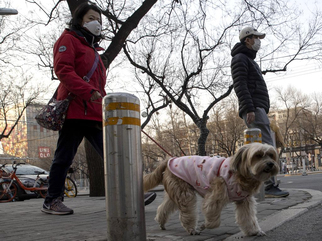 A resident wearing a mask walks her dog on the streets of Beijing. Pet cats and dogs cannot pass the new coronavirus on to humans, but they can test positive for low levels of the pathogen if they catch it from their owners, according to Hong Kong's Agriculture, Fisheries and Conservation Department after a dog in quarantine tested weakly positive for the virus. Picture: AP Photo/Ng Han Guan