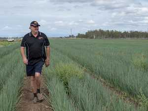 Good as you can get: Growers pleased by workable allocations
