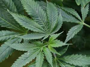 Rubyvale man's backyard home to marijuana plants