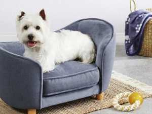 Aldi selling miniature sofas for pets