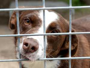 Tweed's pet pound to be rehomed