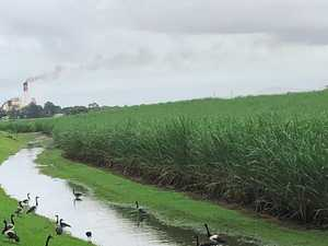 Cane farmers slam DES over reef regulations