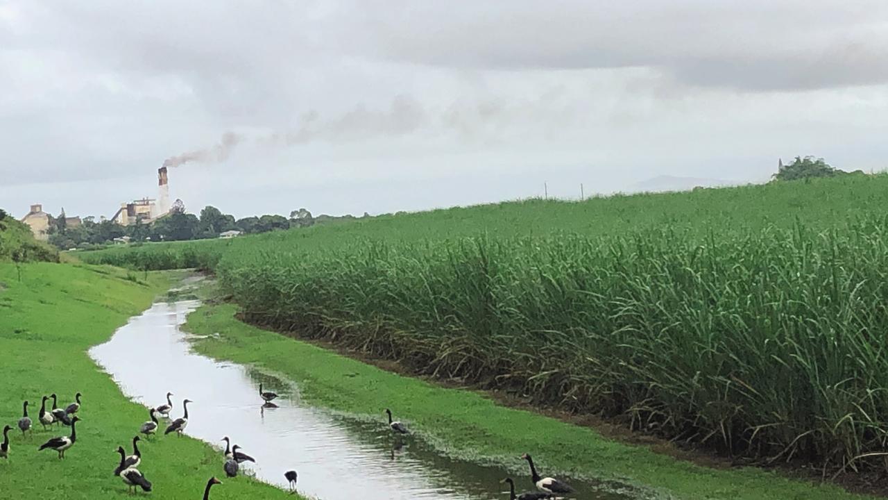West Mackay cane field looking towards Racecourse Mill.