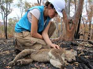Confronting photos show fight to find hurt koalas