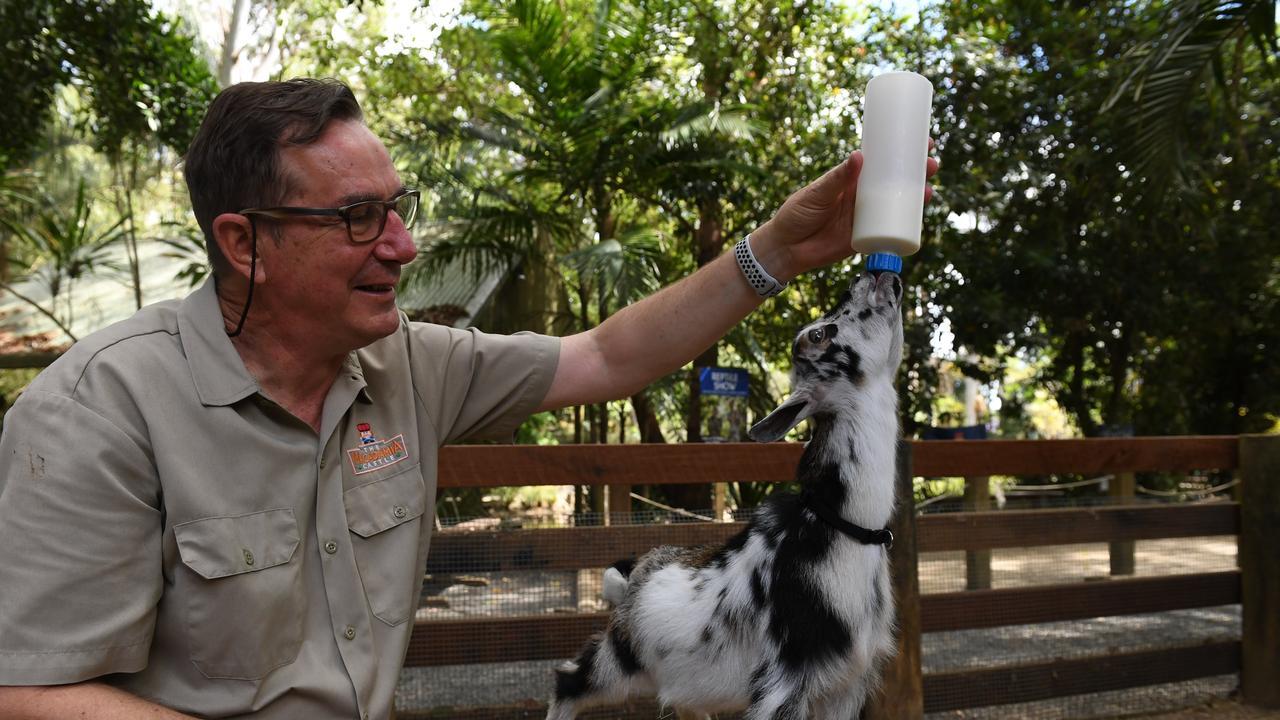 Macadamia Castle owner Tony Gilding feeds the Nigerian Dwarf goats, an American breed of dwarf goat.