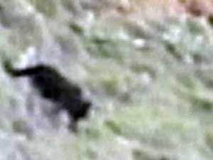 Mysterious creature spotted lurking beside beach and road