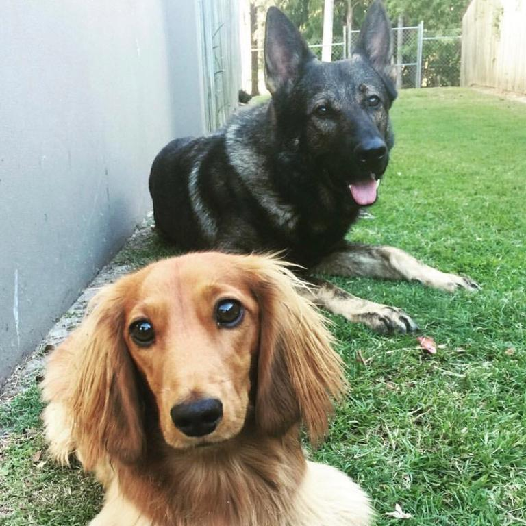 PD Hondo (back) relaxing with his mate Harvey.