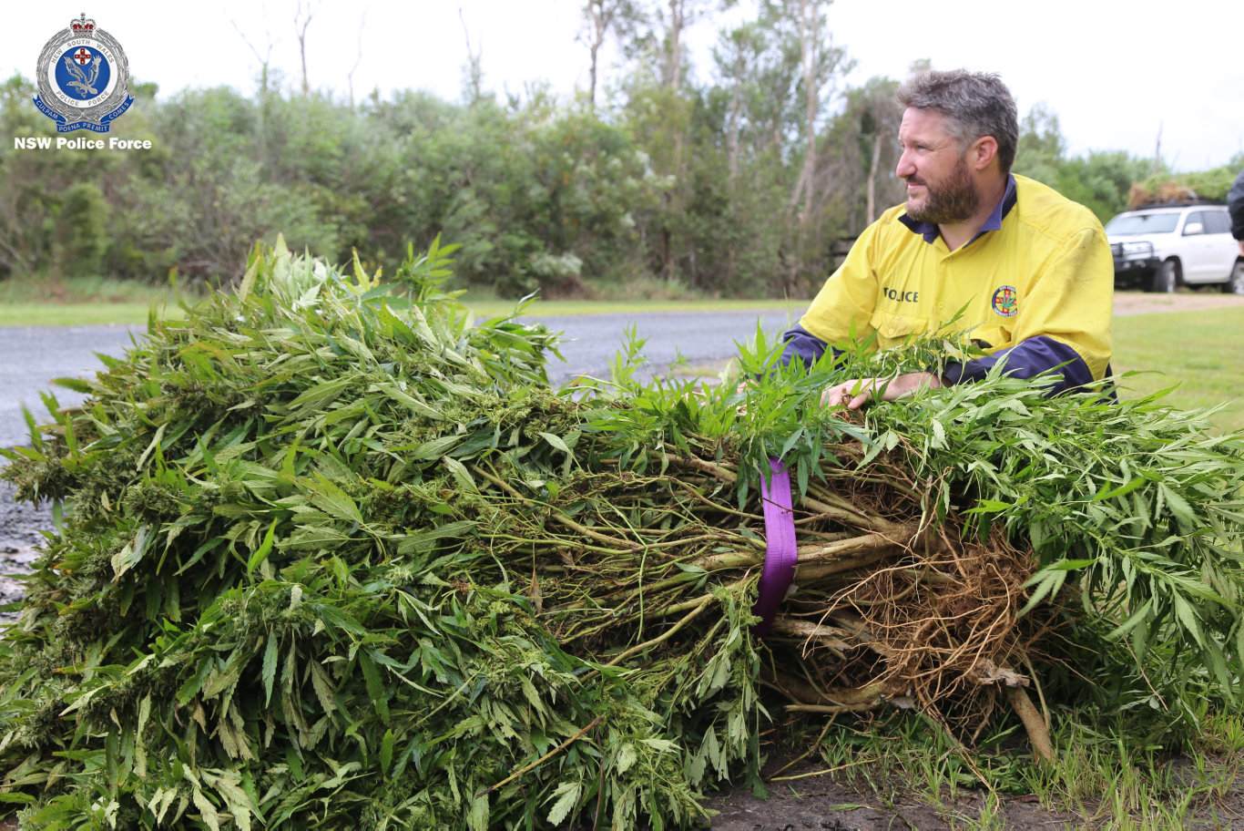Nearly $12 million worth of cannabis has been seized as part of this year's Cannabis Eradication Program (CEP) in the state's north.