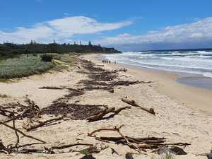 Should council fund a $12K beach clean-up?