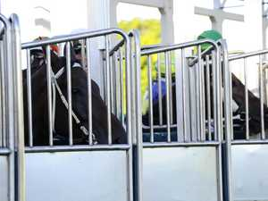 Racing set to continue in Grafton behind closed doors