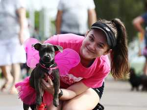 RSPCA forced to change Million Paws Walk due to coronavirus