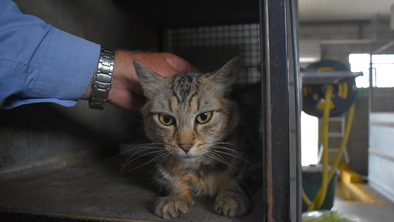 A cat was stolen by a woman's housemate and taken to the pound. Photo: File