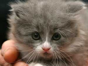 Kitten torturer wins blue card appeal
