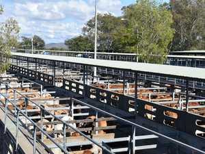 Rockhampton beef industry robust despite COVID-19 rumours