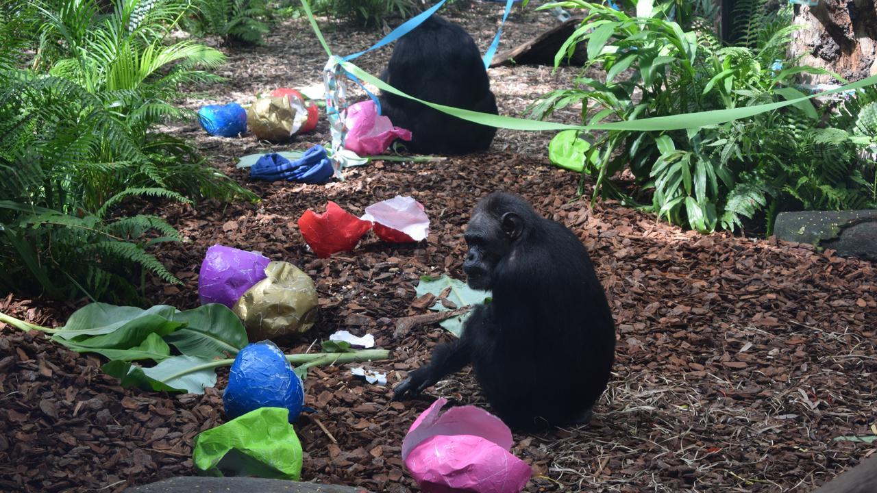 Rockhampton Zoo.