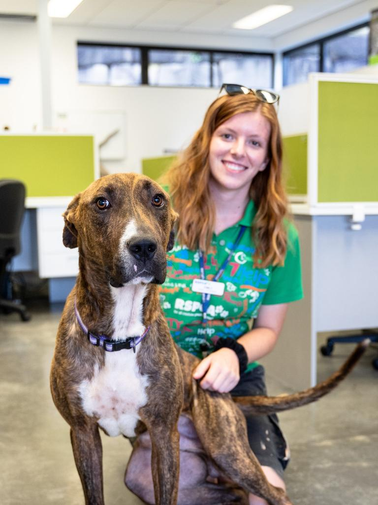 Office dog in the making Noah with volunteer. Pic Peter Wilson
