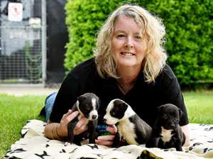 Puppies and their carer