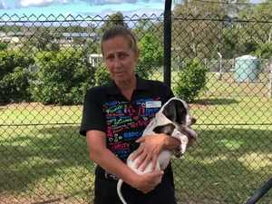 Gympie RSPCA lockdown preparations