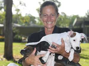 RSPCA LOCKDOWN: How Gympie will fare if it happens