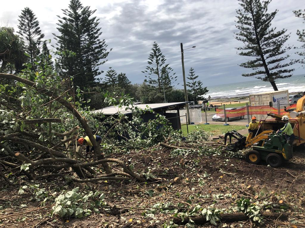 Cottonwood trees cleared from a Shelly Beach park left residents horrified.