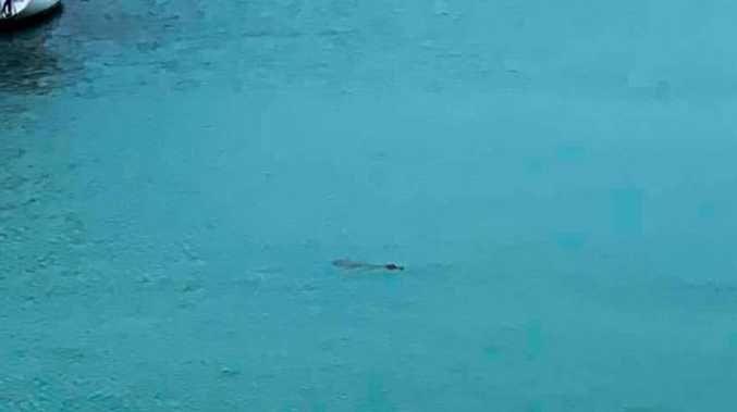 WATCH: Croc spotted swimming inside marina