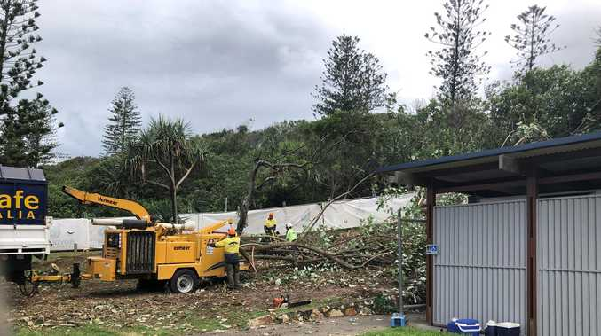 Residents angered as cotton wood trees come down