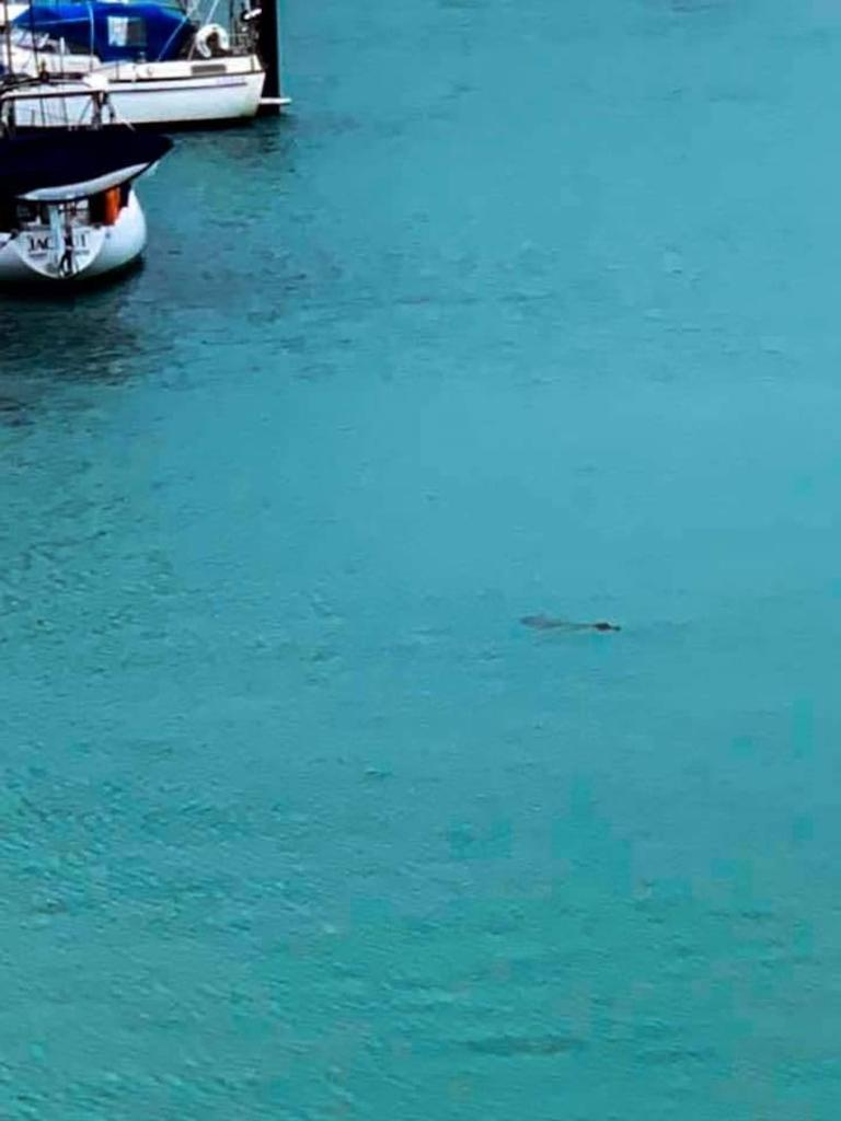 Mackay resident Tianna Neeve took these photos of the croc swimming in the Mackay Marina this morning.