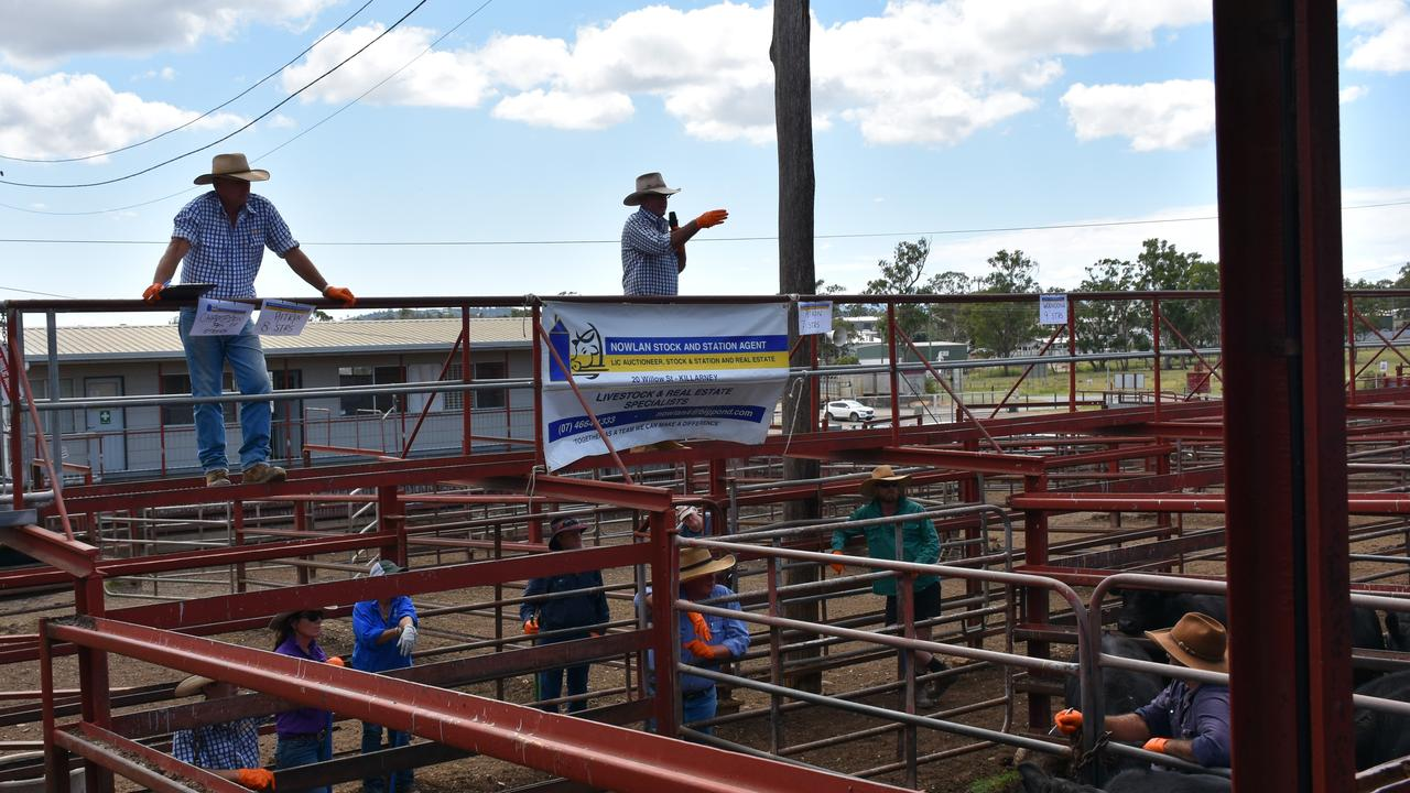 NEW APPROACH TO SALES: Brian Gartery and Michael Nowlan auction off an impressive head of cattle despite the growing coronavirus fears.