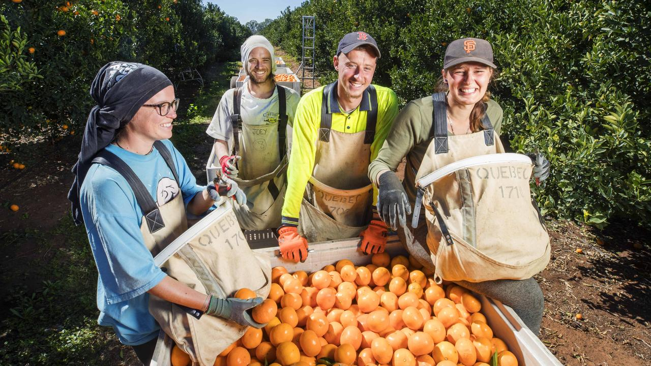 French Pickers Alicia Ferrant 21, Jordan Duboust 25, Steevy Baillon 22 and Alicia Pennel 24 working at Quebec Citrus at Mundubbera in 2018. Photo: File