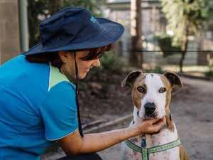 Concerns of mass pet surrender post-virus