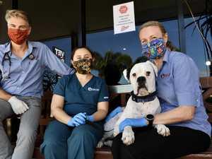 Coast vet ensures pet safety during crisis