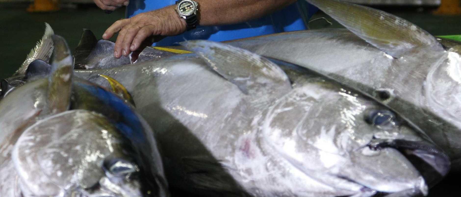 The owner of GBR Tuna Bob Lamason
