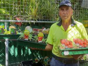 Strong demand for seedlings in CQ