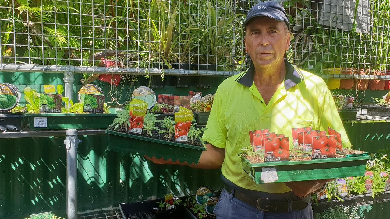 BUSY BUSINESS: Geoff Askin from Avondale Gradens Gracemere Nursery has been flat out trying to keep up with strong demand for food seedlings since the COVID-19 pandemic escalated.