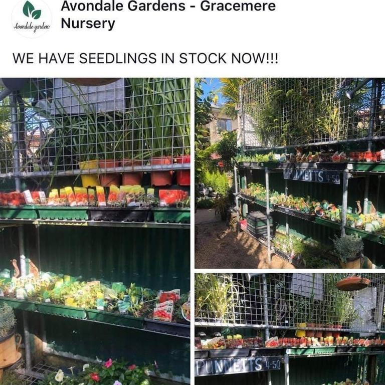 STRONG DEMAND: Seedlings like the ones recently restocked in Avondale Gardens Gracemere Nursery are as valuable as good according to nursury co-owner Geoff Askin.