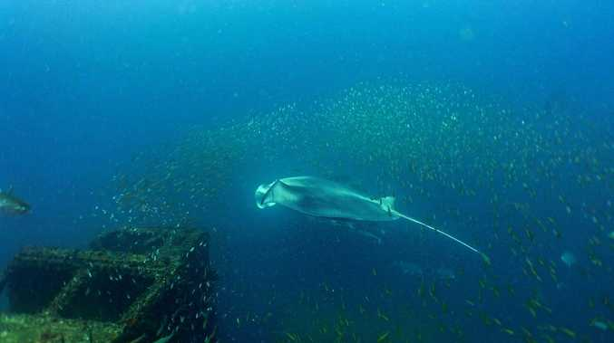 'Amazing' encounter with ocean giant at Tobruk dive site