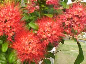 GARDENING: Autumn provides the perfect conditions for blooms