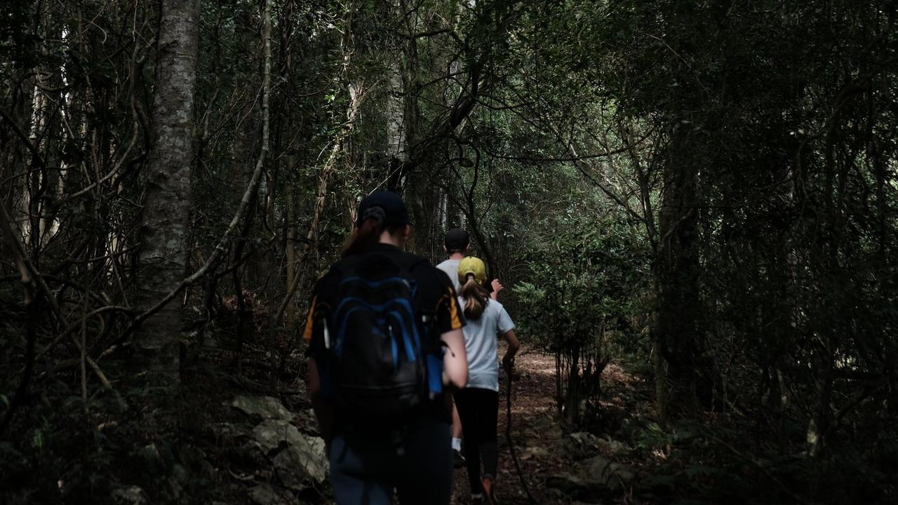 HIKING: The Bunya Mountains has many different tracks for bushwalks. (PHOTO: Jessica McGrath)