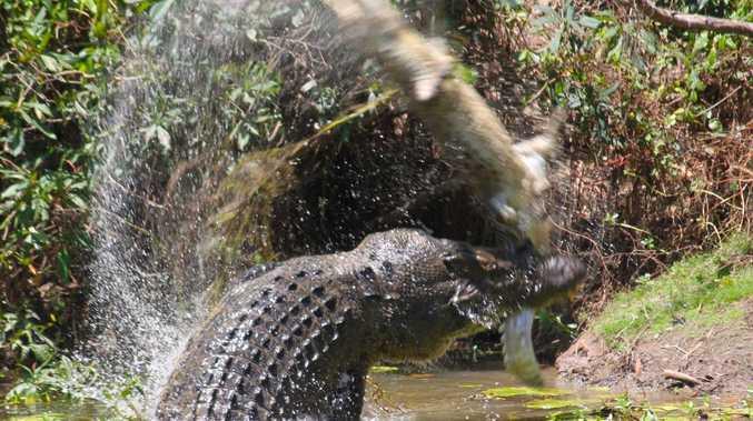Crocodile found dead in shocking roadside discovery